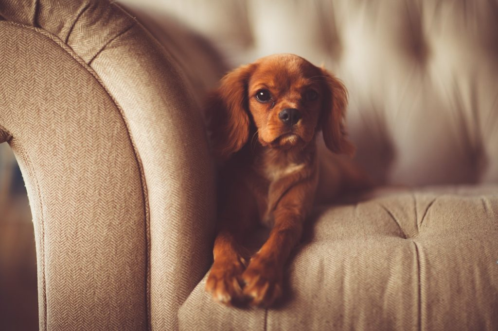 Adorable Dog Sitting on a Couch Relaxing