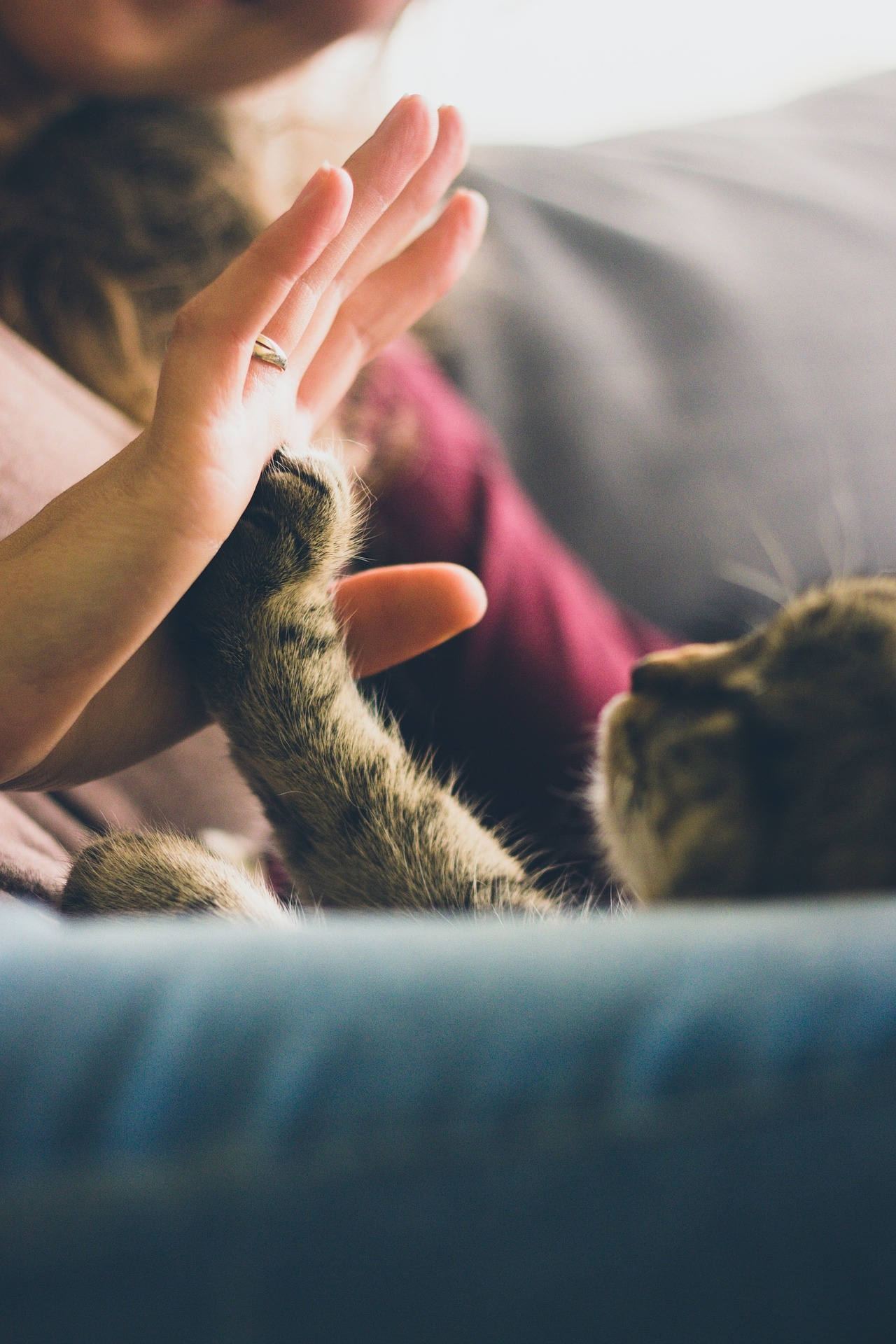 A Cat Giving a High FIve