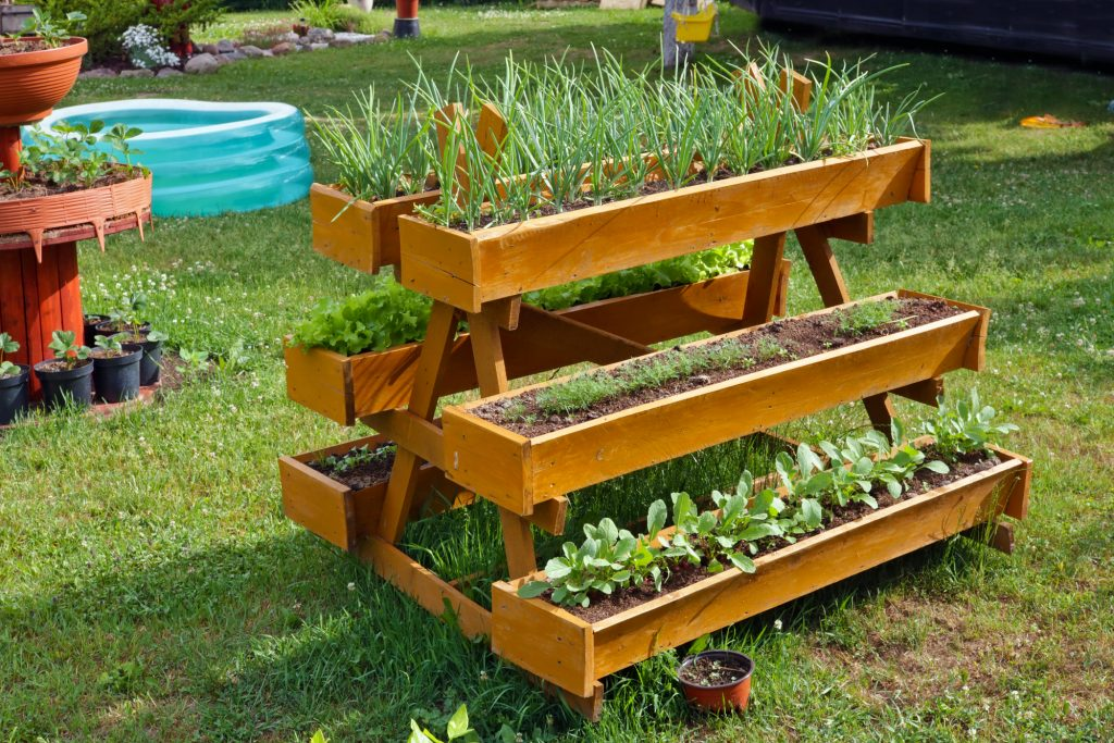 Homemade rural mobile wooden vegetable beds for growing onions, dill and radish plants. Sunny summer day outdoor shot