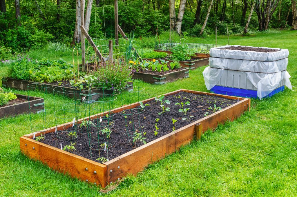 Raised beds in a vegetable community garden