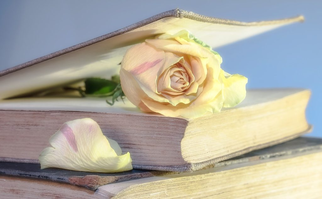 A rose inside a book