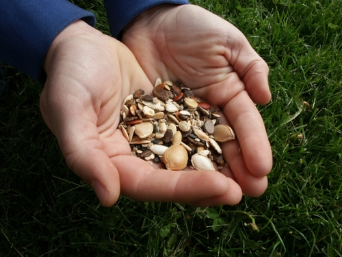 Seeds in hands