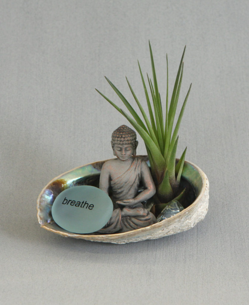 buddha in a garden shell abalone