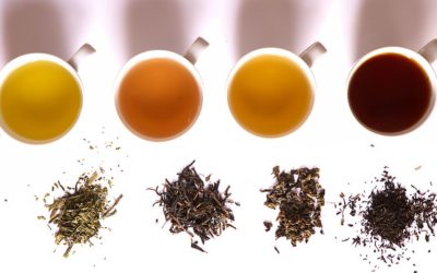 Caffeine Content in Different Teas (White, Green, Oolong and Black)