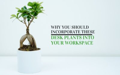 Why You Should Incorporate Desk Plants into Your Workspace