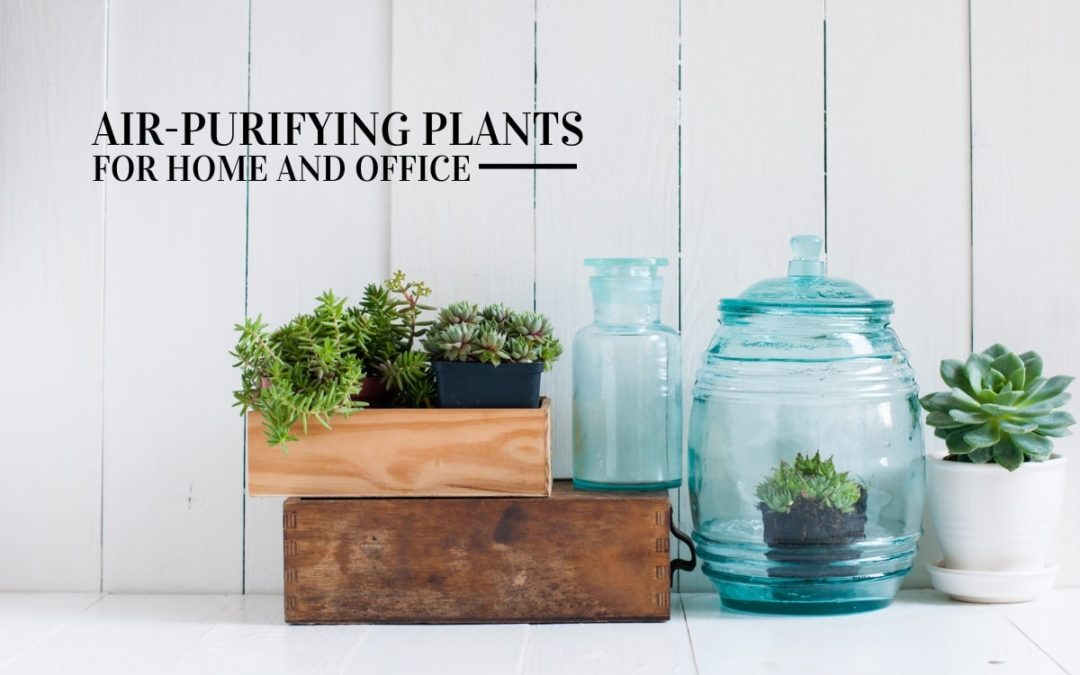 Air Purifying Plants Great for Your Home