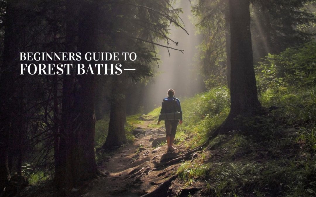 A Beginner's Guide to Forest Bathing