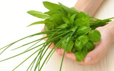 7 Best Herbs to Grow Indoors