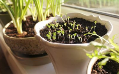 5 Indoor Gardening Scenarios – Who What When Where Why