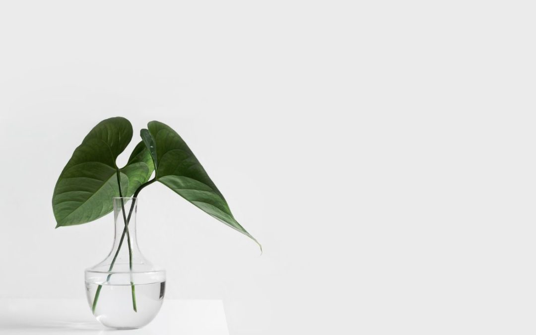 Minimalist decor with a white table and vase with green plant