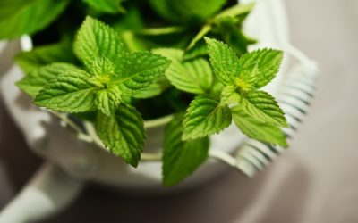 All About Peppermint and Its Benefits