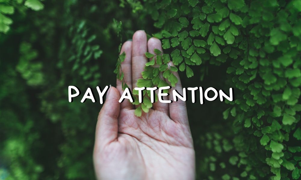 Pay attention (hand grasping green leaves)