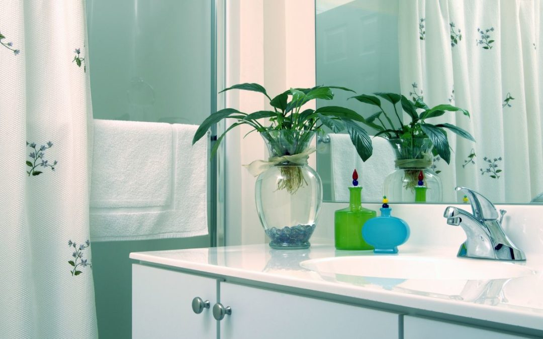 Bathroom sink, shower curtain, towel and green plant