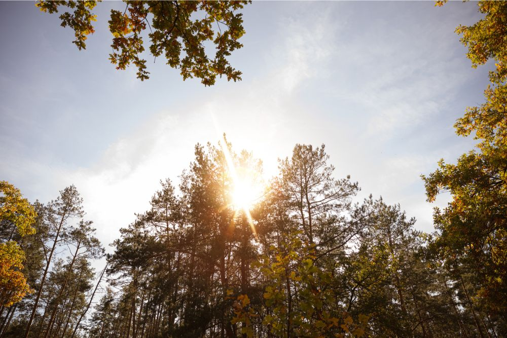 Sun shining in the forest