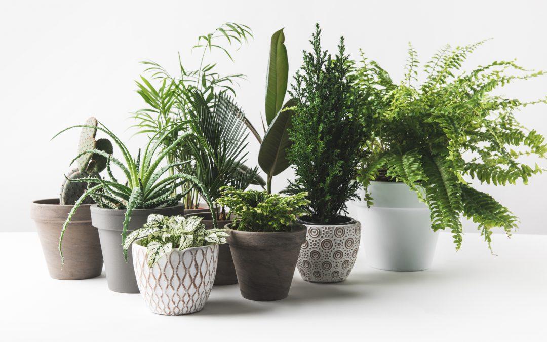 Houseplants pots